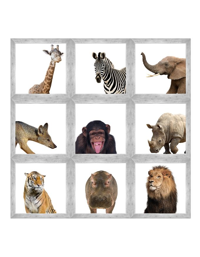 It's just an image of Printable Jungle Animals with cut out